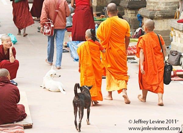 Buddhism, Buddha Buddhist trail, Jeffrey-M-Levine-MD; Jeff-Levine, Dr-Jeffrey-Levine, Jlevinemd, levineartstudio, india, spirituality, Bodh Gaya