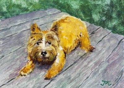 winslow, dog portrait, Norwich Terrier, gouache